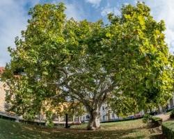 Te hova ültetnél el több ezer fát Fehérváron?