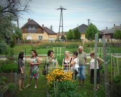 Élet a városi közösségi kiskertben