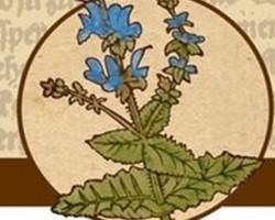 Gyógynövénygyűjtő túra – Nadapi virágok