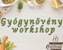Gyógynövény workshop avagy gyógynövények a mindennapokban