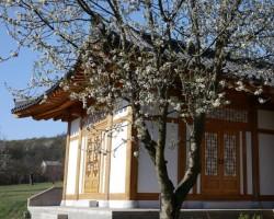 Koreai zen meditáció