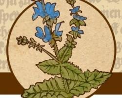Herbárius túra Csóron