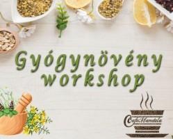 Gyógynövény workshop