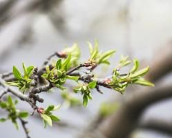 Tavaszi megújulás a természet erejével