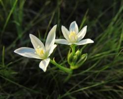 Tavaszváró Ökotúra