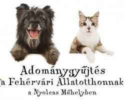 Adománygyűjtés a Fehérvári Állatotthonnak