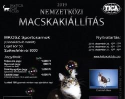 Dorombolós Szilveszter - Nemzetközi Macskakiállítás