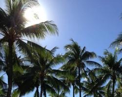 Hawaii tánc kezdőknek