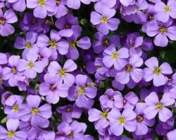13. Európai Dísznövény és Kertművészeti Napok