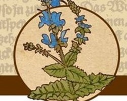 Gyógynövénygyűjtő túra – A nyár ajándékai