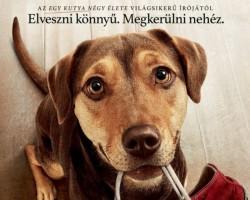 Egy kutya hazatér