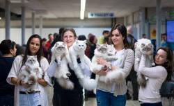 Hawaii Luau Party Cat Show – Macskakiállítás