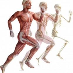 Természetgyógyász képzés - Egészségügyi alapmodul