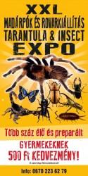 Madárpók és rovarkiállitás